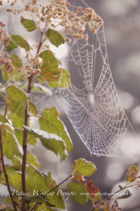 PictureWritingPrompt-spiderweb